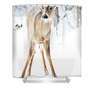 Beautiful Deer Shower Curtain