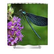 Beautiful Demoiselle Male Switzerland Shower Curtain