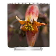 Beautiful Echeveria Bell Shower Curtain