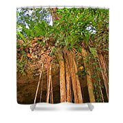 Beautiful Forest Shower Curtain