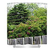 Beautiful Front Yard - Roses - Trees Shower Curtain