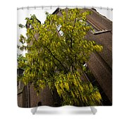 Beautiful Golden Chain Tree In Full Bloom Shower Curtain