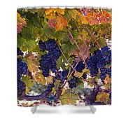 Beautiful Grape Harvest Shower Curtain