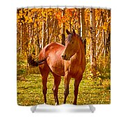 Beautiful Horse In The Autumn Aspen Colors Shower Curtain by James BO  Insogna
