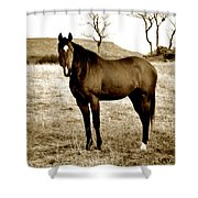 Beautiful Horse Shower Curtain