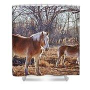 Beautiful Horses Shower Curtain
