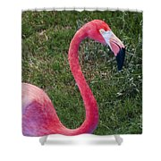 Beautiful In Pink Shower Curtain