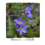Beautiful Jacob's Ladder Shower Curtain
