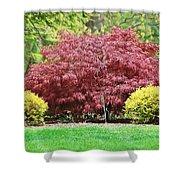 Beautiful Japanese Maple Shower Curtain