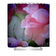 Beautiful Lavender And Purple Roses Shower Curtain