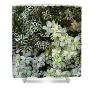Beautiful Leaves Shower Curtain