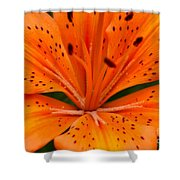 Beautiful Lily Shower Curtain