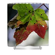 Beautiful Maple Leaf Shower Curtain