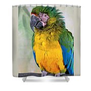 Beautiful Molly Shower Curtain
