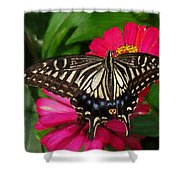 Beautiful Swallowtail Butterfly Shower Curtain