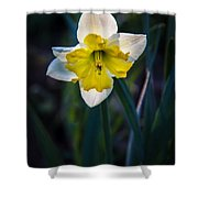 Beautiful Narcissus Shower Curtain