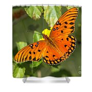 Beautiful Orange Butterfly - Gulf Fritillary Shower Curtain