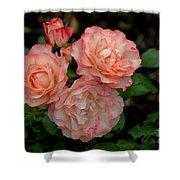 Beautiful Peach Roses Shower Curtain