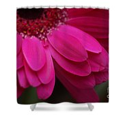 Beautiful Petals Shower Curtain