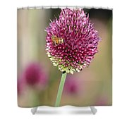 Beautiful Pink Flower With Bee Shower Curtain