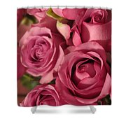 Beautiful Pink Roses 6 Shower Curtain