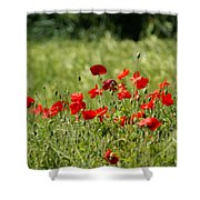 Beautiful Poppies 1 Shower Curtain
