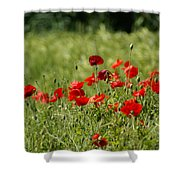 Beautiful Poppies 2 Shower Curtain