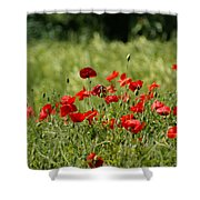 Beautiful Poppies 3 Shower Curtain