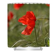 Beautiful Poppies 5 Shower Curtain