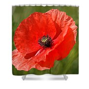 Beautiful Poppies 7 Shower Curtain
