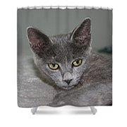 Beautiful Portait Of A Grey Russian Tabby Cat Shower Curtain