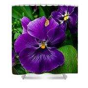 Beautiful Purple Pansies Shower Curtain