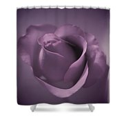 Beautiful Purple Rose Shower Curtain