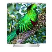 Beautiful Quetzal 2 Shower Curtain