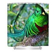 Beautiful Quetzal 4 Shower Curtain
