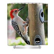 Beautiful Red Belly Woodpecker Jr Shower Curtain