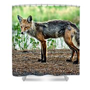 Beautiful Red Fox Shower Curtain