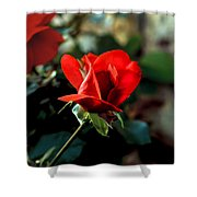 Beautiful Red Rose Bud Shower Curtain by Robert Bales