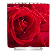 Beautiful Red Rose Close Up Shoot Shower Curtain