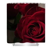 Beautiful Red Roses Shower Curtain