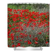 Beautiful Red Wild Anemone Flowers In A Spring Field Shower Curtain
