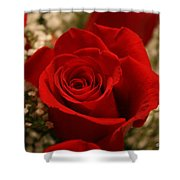 Beautiful Rose Shower Curtain