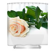 Beautiful Rose On White Shower Curtain