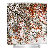 Beautiful Rowan 1 Shower Curtain