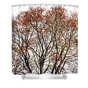 Beautiful Rowan 11 Shower Curtain