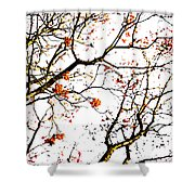 Beautiful Rowan 7 Shower Curtain