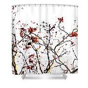 Beautiful Rowan 8 Shower Curtain
