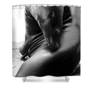 Beautiful Sea Lion - Black And White Shower Curtain
