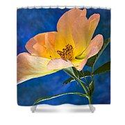 Beautiful Single Rose Shower Curtain