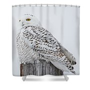 Beautiful Snowy Owl Shower Curtain
